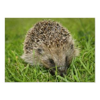Hedgehog Invitation