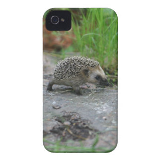 Hedgehog iPhone CaseMate Case-Mate iPhone 4 Cases