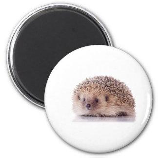 Hedgehog, Magnet