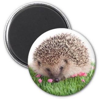 hedgehog, 6 cm round magnet