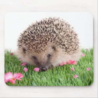 hedgehog, mouse mat