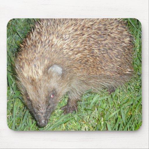 Hedgehog Mousepads
