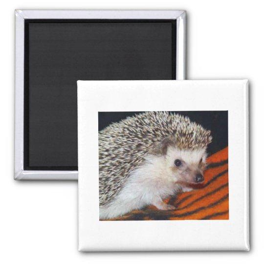 Hedgehog Square Magnet
