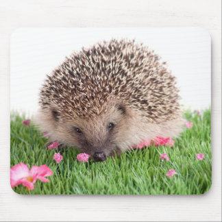 hedgehog tapis de souris