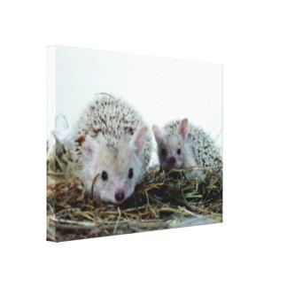 Hedgehogs as Pets Canvas Print