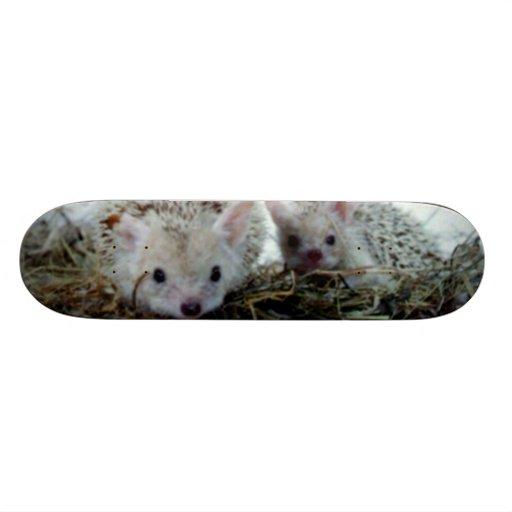 Hedgehogs as Pets Skate Boards