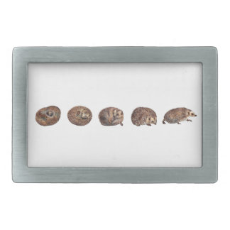 Hedgehogs in a line rectangular belt buckles