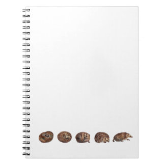 Hedgehogs in a line spiral notebook