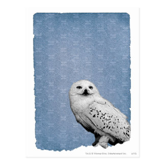 Hedwig 2 postcard