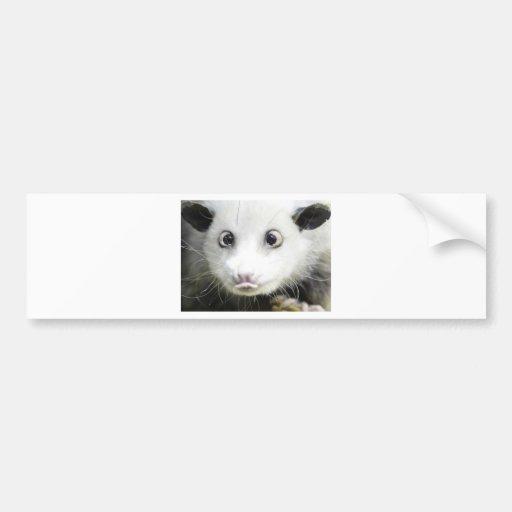 Heidi The Cross Eyed Opossum Bumper Stickers