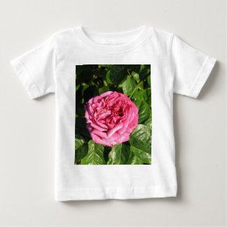 Heirloom Hybrid Tea Rose 027 Tee Shirt