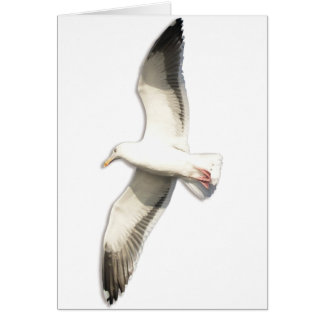 Helaine s Soaring Seagull Greeting Card