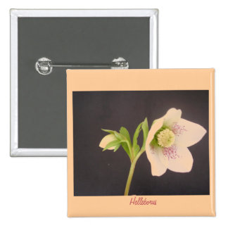 Helebore Flower Pinback Button