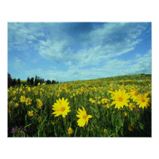 Helianthella on Blacktail Plateau Poster