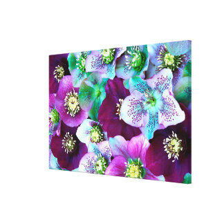 Heliborus pattern of winter blooming flower, stretched canvas prints