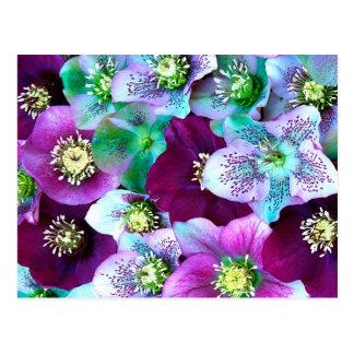 Heliborus pattern of winter blooming flower, postcard