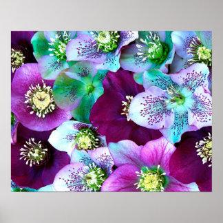 Heliborus pattern of winter blooming flower, poster