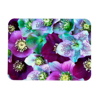 Heliborus pattern of winter blooming flower, rectangular photo magnet