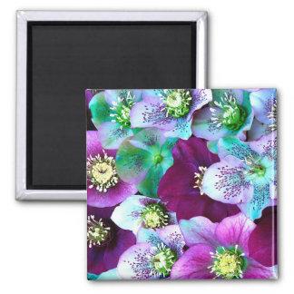 Heliborus pattern of winter blooming flower, square magnet