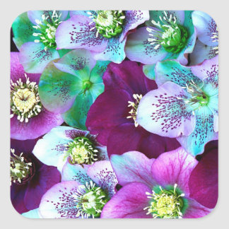 Heliborus pattern of winter blooming flower, square sticker