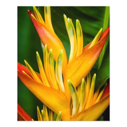 Heliconia Bird of Paradise Flower Photography Custom Flyer