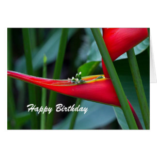 Heliconia Birthday  Card
