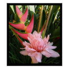 Heliconia Pink Torch Ginger Hawaiian Poster Prints
