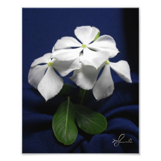 Helicopter Flowers Photograph