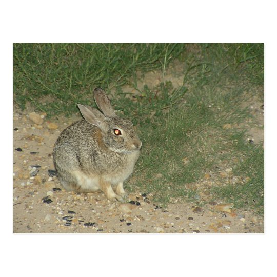 Hell Bunny Postcard