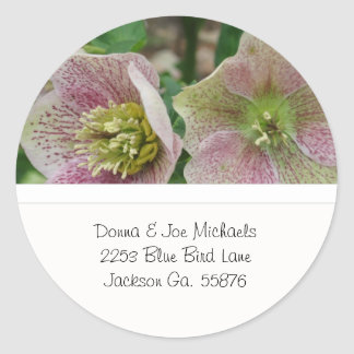 Hellebores Flowers Address Stickers