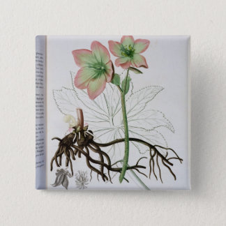 Helleborus Niger from 'Phytographie Medicale' by J 15 Cm Square Badge