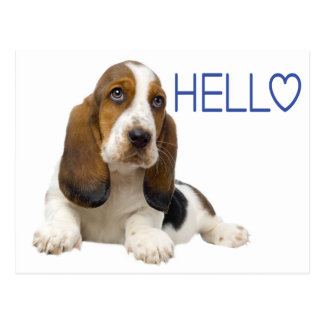 Hello Basset Hound Puppy Dog Blue Thinking of You Postcard