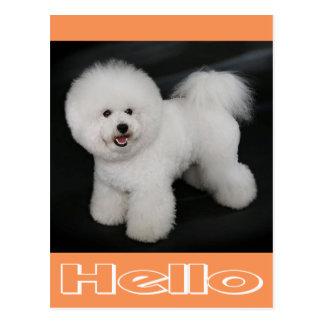 Hello Bichon Frise Puppy Dog Blank Post Card