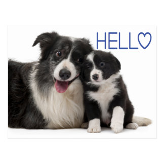 Hello Border Collie Puppy Dog - Thinking of You Postcard