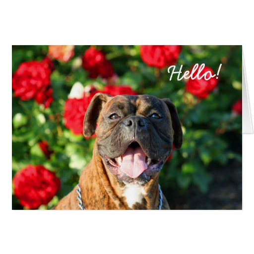 Hello Boxer Greeting Card