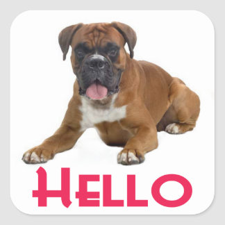 Hello Boxer Puppy Dog Greeting Sticker