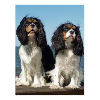 Hello Cavalier King Charles Spaniel Puppy Dog Postcard
