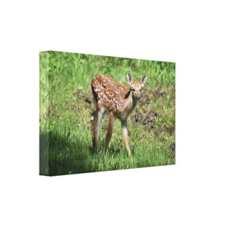 Hello Deer Canvas Print