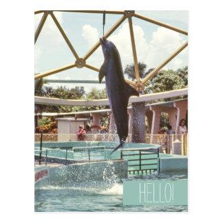 Hello Florida Dolphin Doing Tricks Postcard