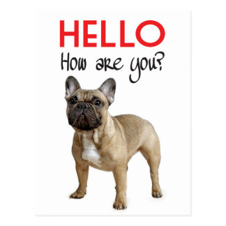 Hello French Bulldog Puppy Dog Post Card