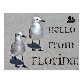 Hello from Florida! Miami seagull Postcard