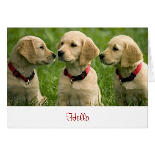 Hello Golden Retriever Puppies  Blank Note Card