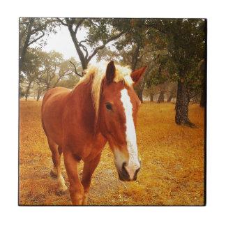 Hello Horse Small Square Tile