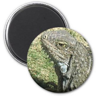 Hello Iguana! Magnet
