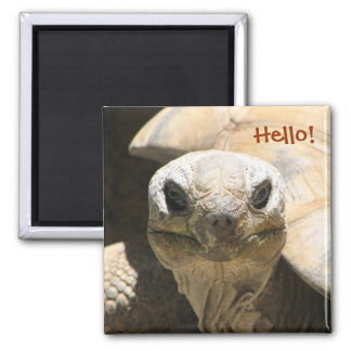 Hello! Magnet