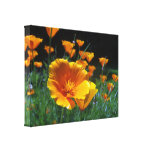 Hello Poppies Wrapped Canvas Canvas Prints