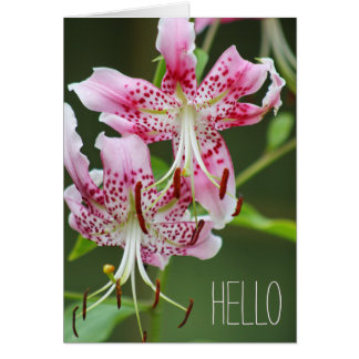 Hello Pretty Pink Tiger Lily Floral Bloom Greeting Card