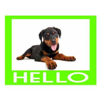 Hello Rottweiler Puppy Dog Greeting Postcard
