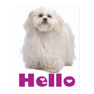 Hello Shih Tzu Puppy Dog Postcard