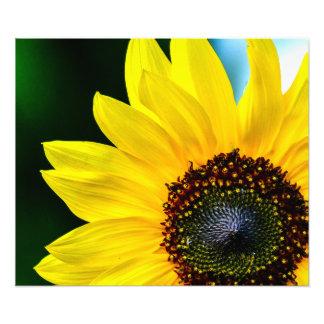 Hello Sunshine Sunflower Art Photo